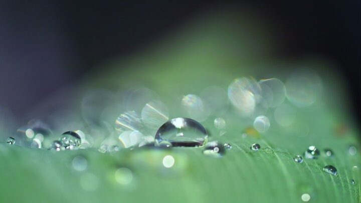 For Plants, Rain has Benefits than Tap Water